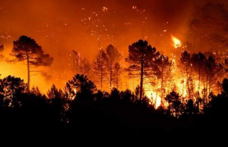 В Донецкой области на время пожарной опасности запретили посещение лесов, фото-1
