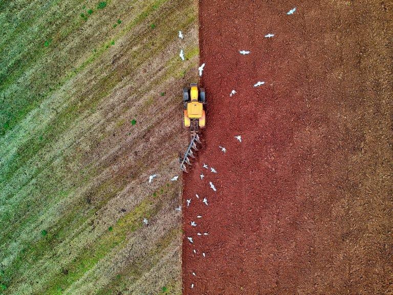 Посев озимых культур начали аграрии ДНР , фото-1