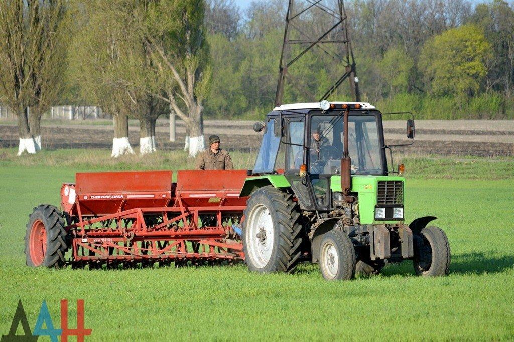 «Экватор» посевной кампании озимых зерновых преодолен в ДНР , фото-1